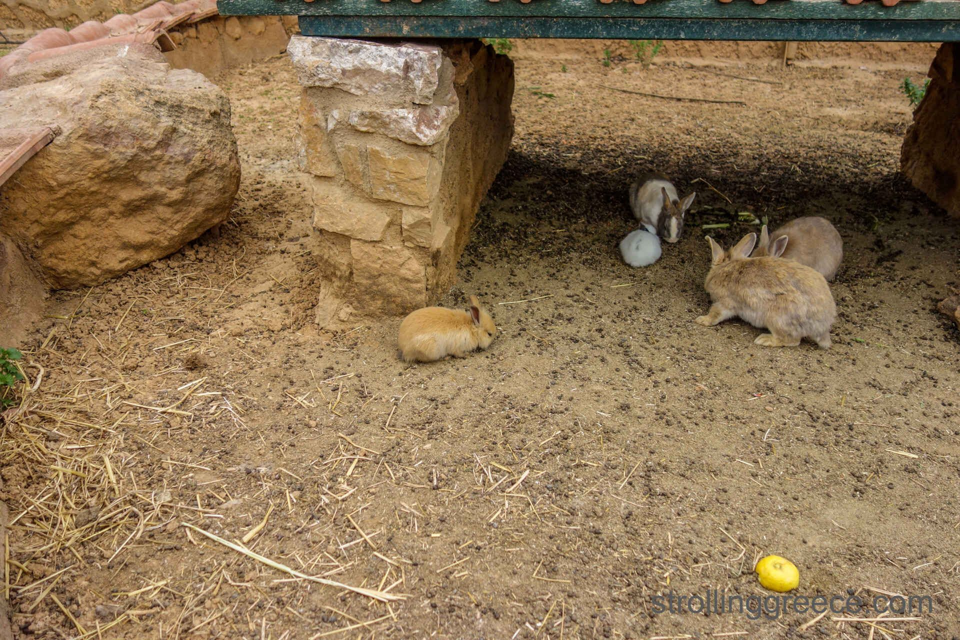 rabbits in the zoo of Athens