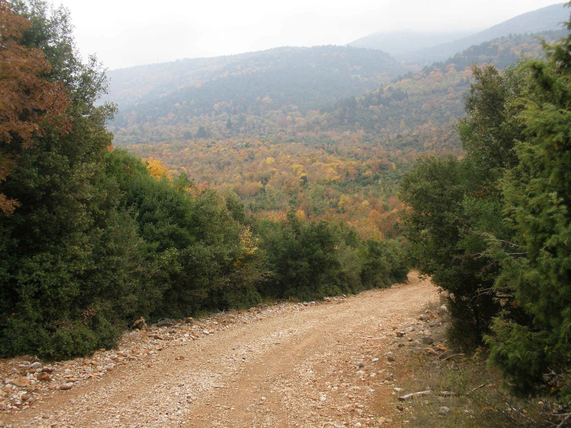 Dirt road near Petra leading into Mount Olympus surrounded by beautiful forests.